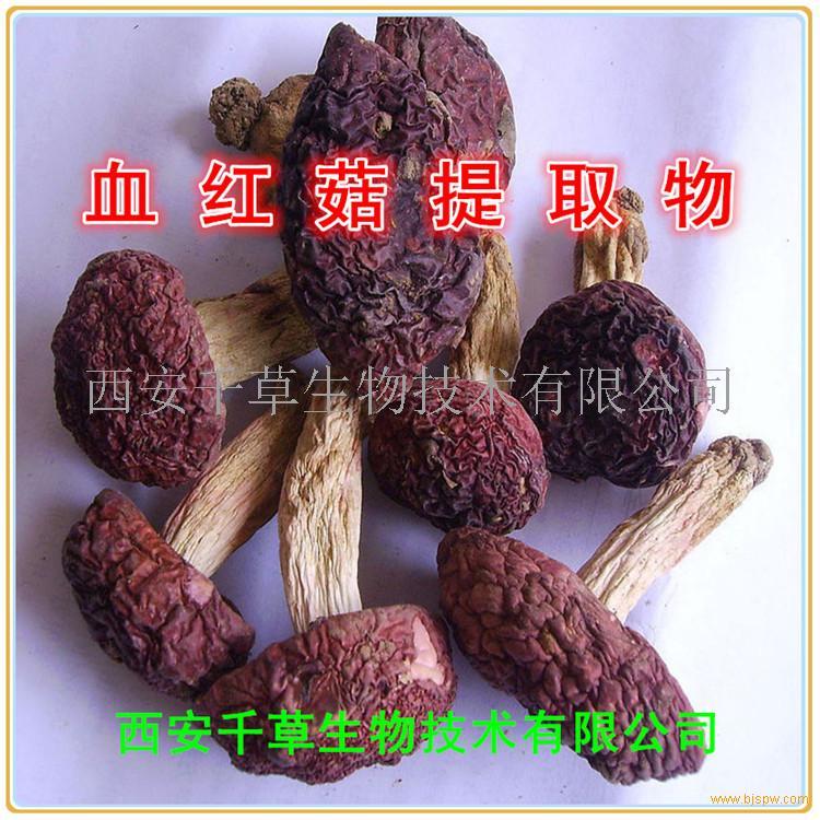 血红菇浓缩粉
