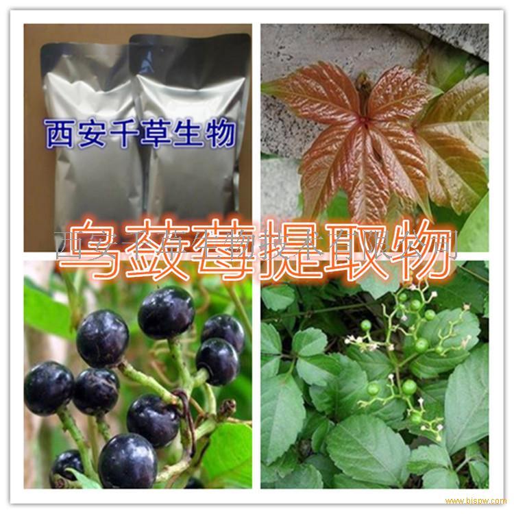 乌蔹莓浓缩粉